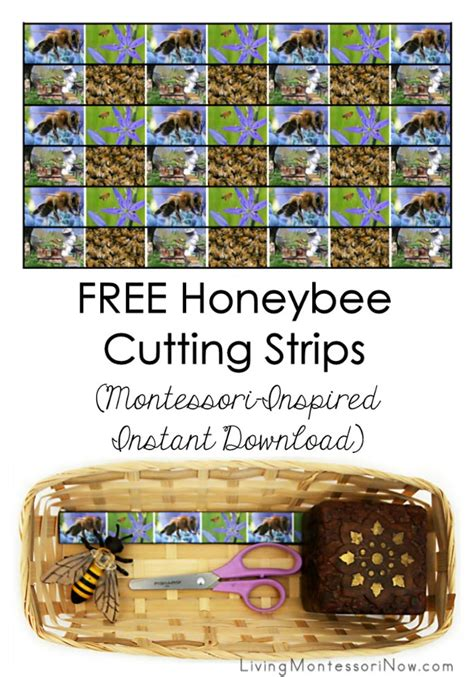 printable montessori cutting strips unit study archives living montessori now
