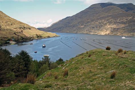 fjord of killary summary file killary harbour jpg wikimedia commons