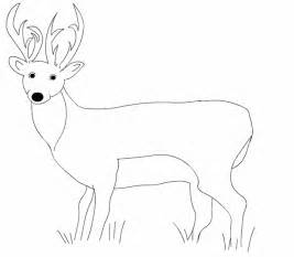 coloring pages white tailed deer images