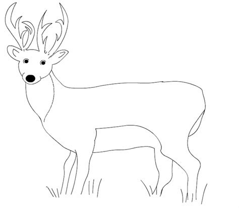 white tail buck colouring pages