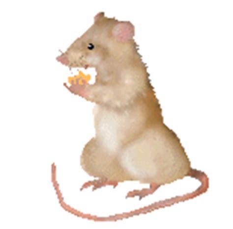 gif animados de desastres naturales gif de fenomenos ciencias naturales 191 ratones en el aula van helmont