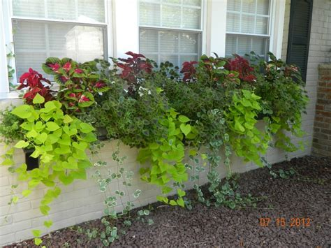easy window box plants top 134 ideas about hanging gardens on cordoba
