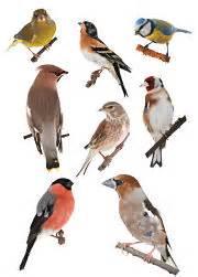 backyard bird identification identify your visitors
