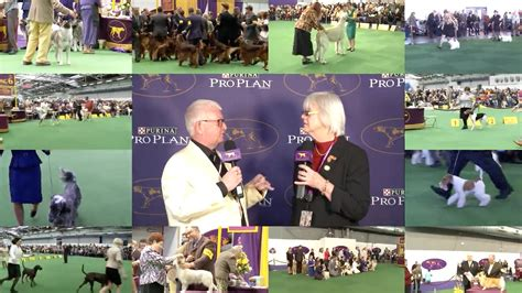 westminster show on tv westminster kennel club westminster show suite spot