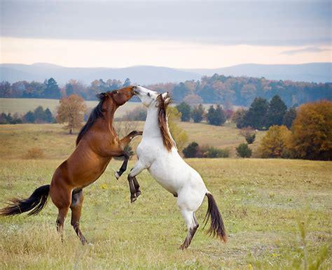 horse information wikipedia parts   english saddle
