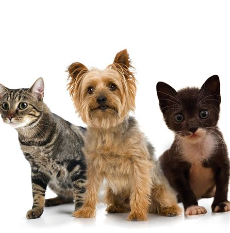 pet stuff wivenhoe pets colchester pet supplies pet sitting walking
