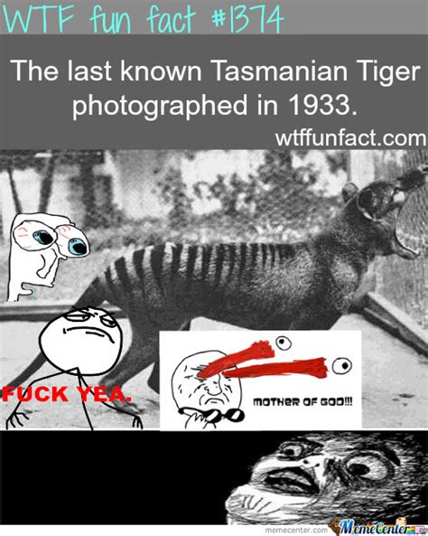 Tasmania Memes - tasmanian tiger by jadeveon41 meme center