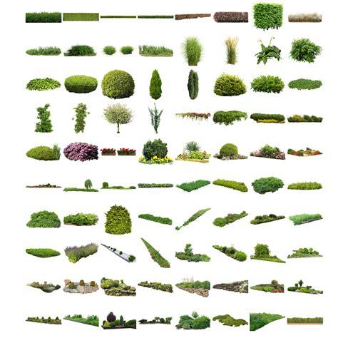 cutout plants v04 graphics for landscape architecture