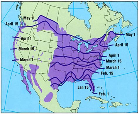 purple martins in western north america at songbirdgarden com