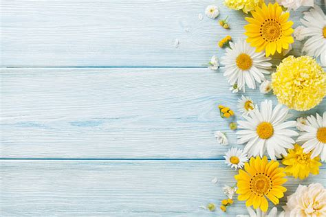 free floral images free floral background images pictures and royalty free