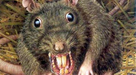 imagenes de ratas halloween top 10 grandes pel 237 culas de ratas hugo zapata