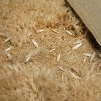 property118 carpet moths who pays for new carpets