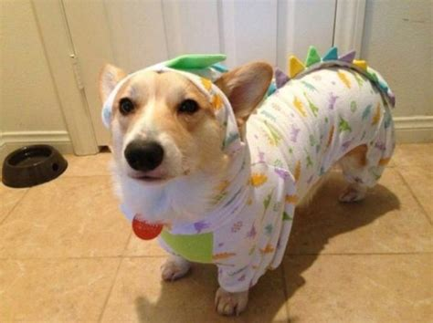 puppy in pajamas 19 dogs rocking the cutest new trend puppy pyjamas