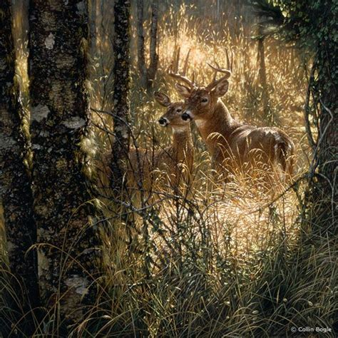 free animal painting beautiful paintings of animals wiresmash
