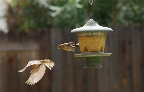 what do i need to know about feeding birds in my yard