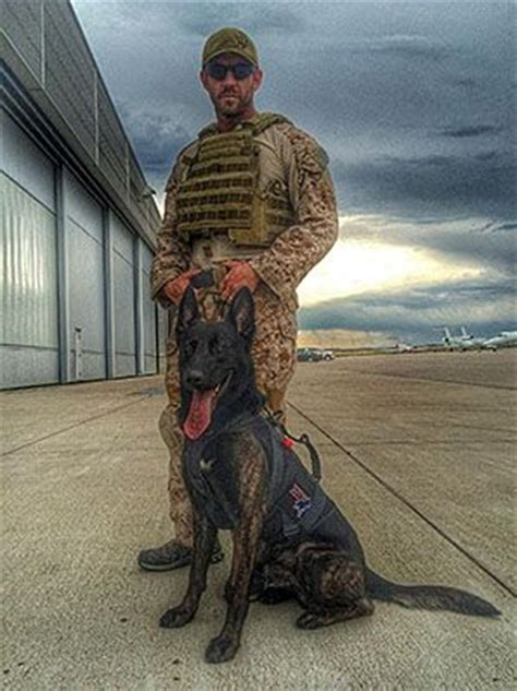 navy seal dogs 344 best images about working dogs on