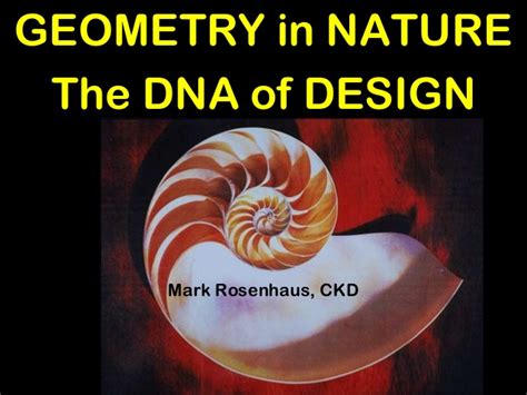 Rectangle Kitchen Design geometry in nature the dna of design for kitchens and