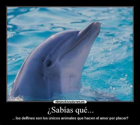 imagenes de amor animadas de delfines imagenes de delfines de amor con frases imagui