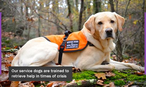 epilepsy service dogs service dogs by warren retrievers looking for new team members newswire