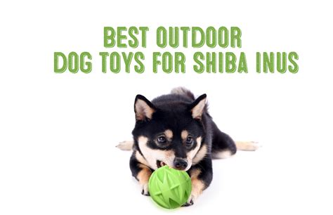 best outdoor dogs best outdoor toys for shiba inus loving dogs my shiba inu