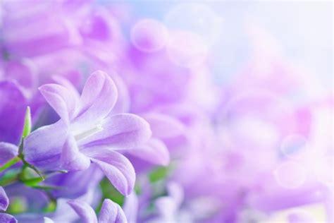 imagenes muy bonitas para fondos bonitas flores de color violeta 35421