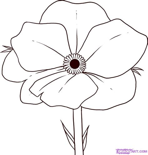 A Drawing Of A Flower by How To Draw Poppy Step By Step Flowers Pop Culture