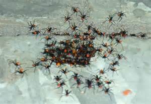 Baby Bed Mattress Size Wheel Bug Hatchlings Exterminated After Hatching Indoors
