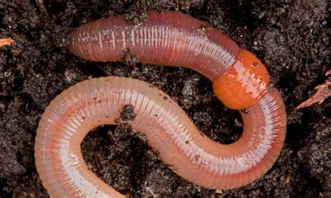 the great garden worm count finds our underground allies - Types Of Garden Worms