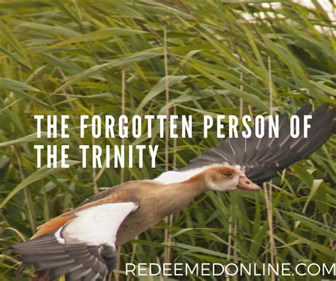 forgotten trinity the the forgotten person of the trinity