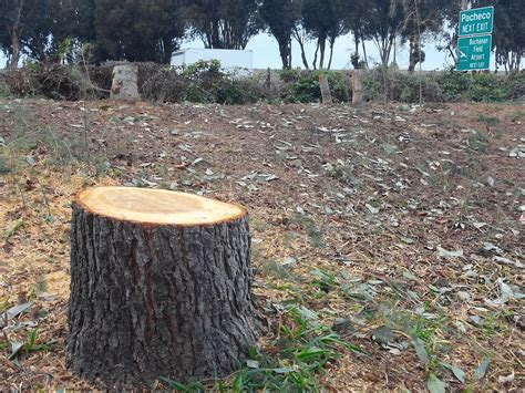 how to cut a tree cut trees driverlayer search engine