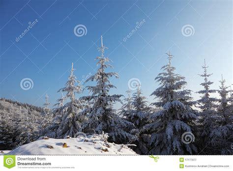 weihnachtsbaum im schnee in der sonne lizenzfreie