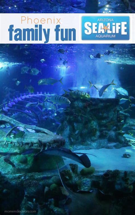 Aquarium Giveaway - phoenix family fun arizona sea life aquarium giveaway