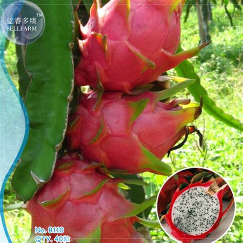 fruit w seeds on outside buy wholesale blue fruit from china blue