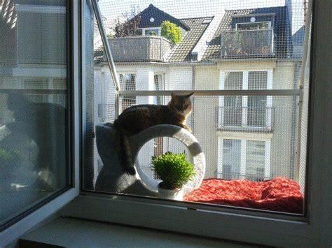 haus fenster fenster katzensicher durch den katzenbalkon vom katzennetz