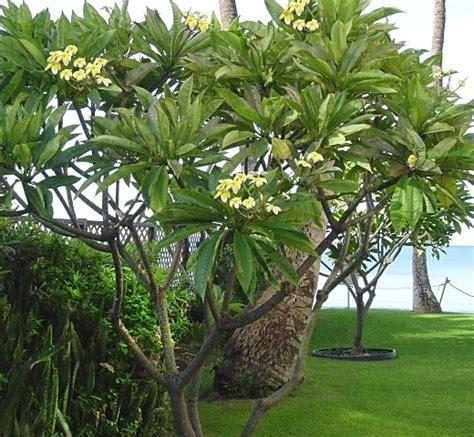 Jual Bibit Bunga Eksotis jual biji tanaman eksotis tanamanbaru