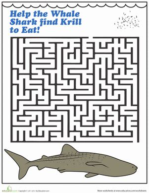printable shark maze whale shark maze worksheet education com