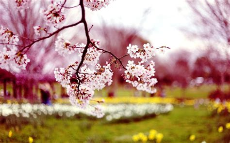 spring wallpaper hd tumblr spring flowers wallpapers hd pictures one hd wallpaper