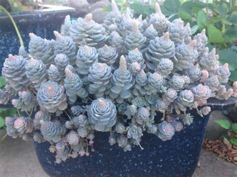 succulent rock garden 25 best ideas about succulent rock garden on