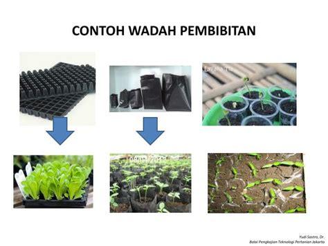 Bibit Kenikir Jakarta ppt posdaya kebun bergizi powerpoint presentation id