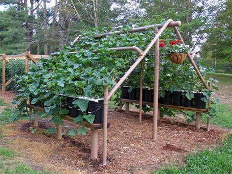 Kitchen Garden Arbor With Pvc Cucumber And Pvc Pipe