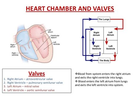 and valves diagram chamber and valve diagram