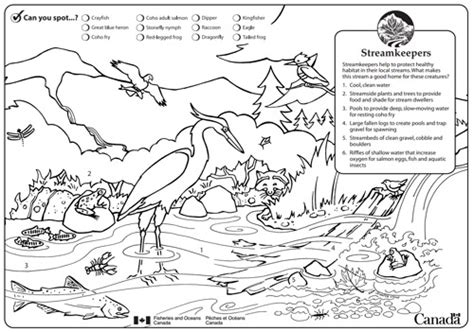 fish habitat coloring pages alouette river management society kids page alouette