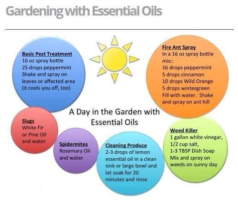 Garden Of Essential Oils 27 Best Images About Doterra For Summer On