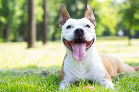 what causes puppy breath causes inherent dangers of bad breath godspeed animal care