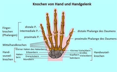 Handgelenk Bilder by Schmerzen Am Rechten Oder Linken Handgelenk