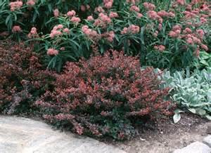 miniature shrubs that flower shrubs dooley landscape designs albuquerque