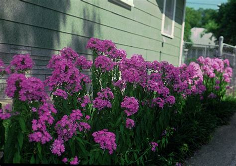 partial sun flowering shrubs 17 best images about partial shade garden on
