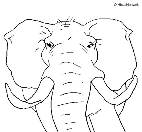 african elephant coloring page coloringcrew com
