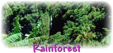 what plants live in tropical rainforest tropical rainforest plants