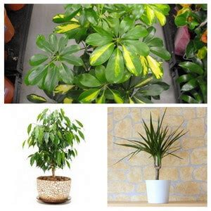 house plant types types of indoor plants www pixshark com images